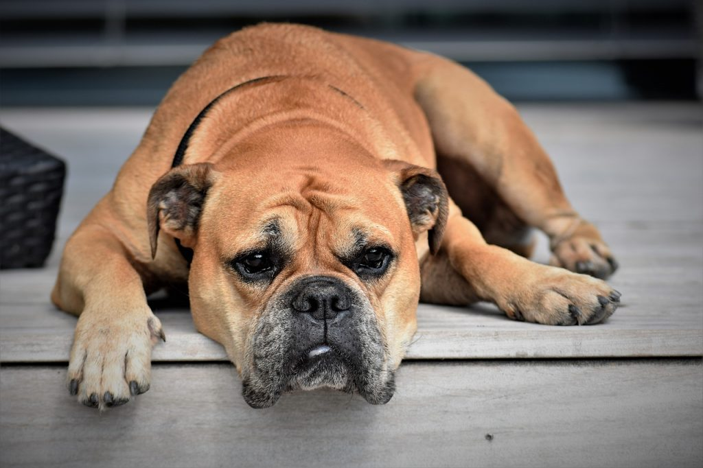Depression in Dogs: Learn The Symptoms And What You Can Do To Help